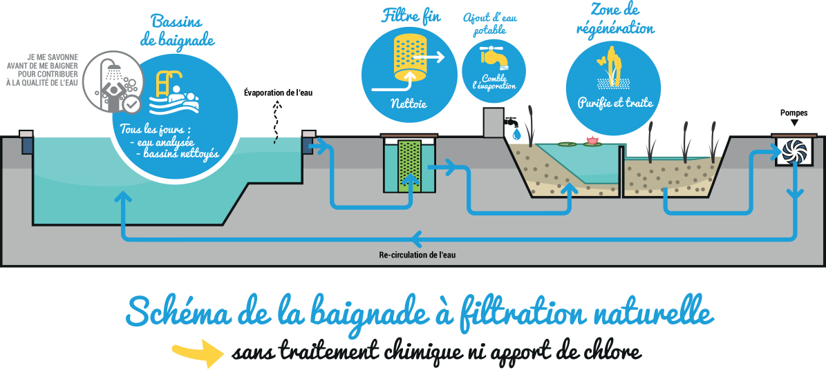 Pour une piscine naturelle dans l co quartier de l arsenal for Schema filtration piscine